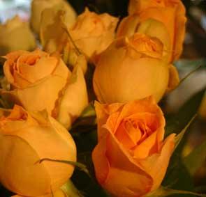 花ギフト|フラワーギフト|誕生日 花|カノシェ話題|スタンド花|ウエディングブーケ|花束|花屋|キャラメルアンティーク