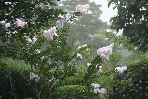花ギフト フラワーギフト 誕生日 花 カノシェ話題 スタンド花 ウエディングブーケ 花束 花屋 サルスベリ