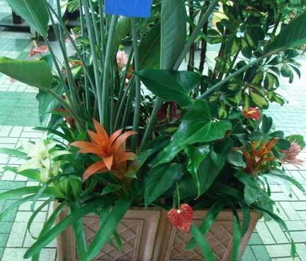 花ギフト|フラワーギフト|誕生日 花|カノシェ話題|スタンド花|ウエディングブーケ|花束|花屋|アナナス