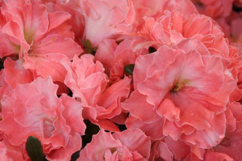 花ギフト|フラワーギフト|誕生日 花|カノシェ話題|スタンド花|ウエディングブーケ|花束|花屋|azarea