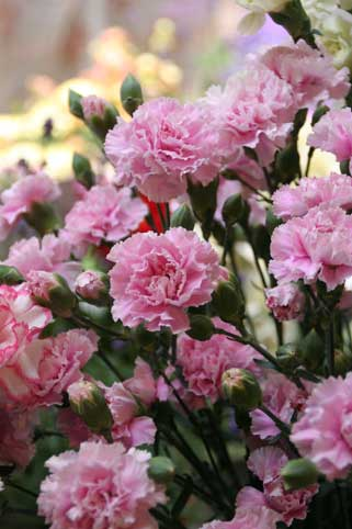 花ギフト|フラワーギフト|誕生日 花|カノシェ話題|スタンド花|ウエディングブーケ|花束|花屋|すずきさん2