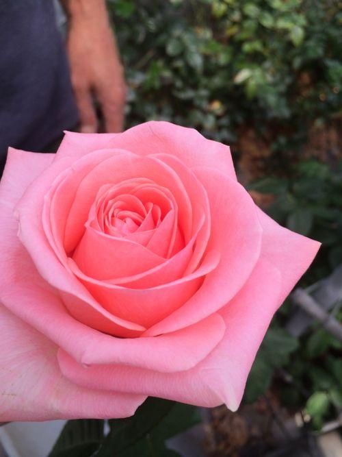 花ギフト|フラワーギフト|誕生日 花|カノシェ話題|スタンド花|ウエディングブーケ|花束|花屋|IMG_4730