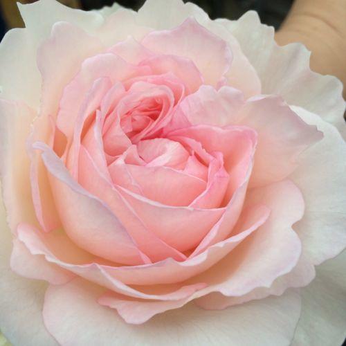 花ギフト|フラワーギフト|誕生日 花|カノシェ話題|スタンド花|ウエディングブーケ|花束|花屋|IMG_7895
