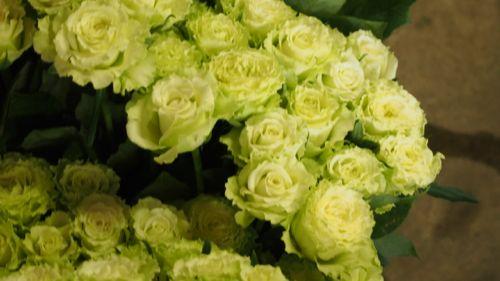 花ギフト|フラワーギフト|誕生日 花|カノシェ話題|スタンド花|ウエディングブーケ|花束|花屋|P1011107