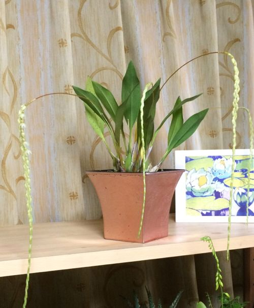 花ギフト|フラワーギフト|誕生日 花|カノシェ話題|スタンド花|ウエディングブーケ|花束|花屋|IMG_9621