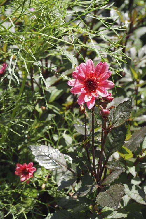 花ギフト|フラワーギフト|誕生日 花|カノシェ話題|スタンド花|ウエディングブーケ|花束|花屋|P8130126