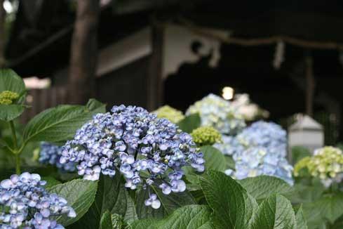 花ギフト フラワーギフト 誕生日 花 カノシェ話題 スタンド花 ウエディングブーケ 花束 花屋 おたふく