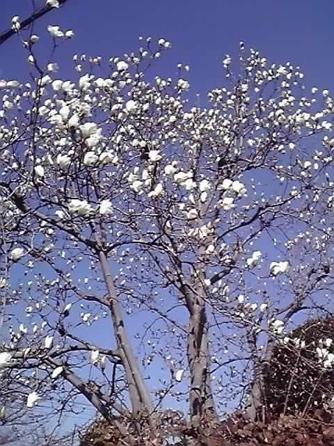 花ギフト|フラワーギフト|誕生日 花|カノシェ話題|スタンド花|ウエディングブーケ|花束|花屋|11-03-18_001
