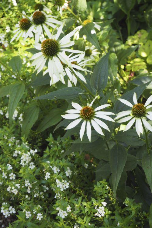花ギフト|フラワーギフト|誕生日 花|カノシェ話題|スタンド花|ウエディングブーケ|花束|花屋|P8130163