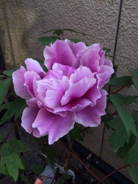 花ギフト|フラワーギフト|誕生日 花|カノシェ話題|スタンド花|ウエディングブーケ|花束|花屋|写真 1(34)