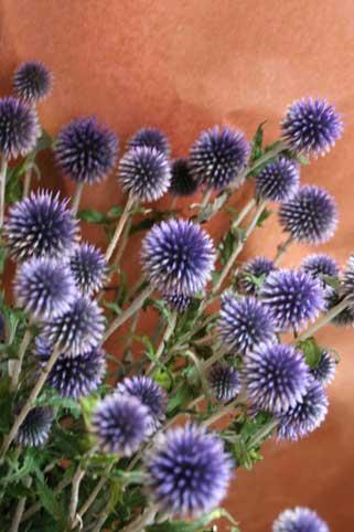 花ギフト|フラワーギフト|誕生日 花|カノシェ話題|スタンド花|ウエディングブーケ|花束|花屋|るり玉
