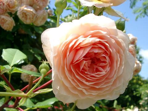 花ギフト|フラワーギフト|誕生日 花|カノシェ話題|スタンド花|ウエディングブーケ|花束|花屋|d352