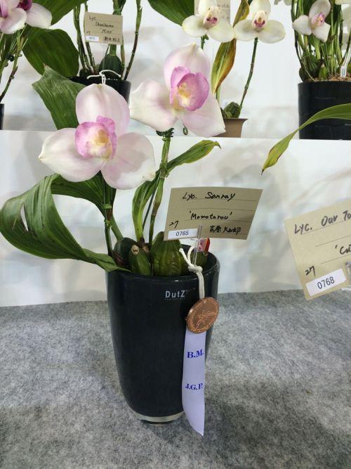 花ギフト|フラワーギフト|誕生日 花|カノシェ話題|スタンド花|ウエディングブーケ|花束|花屋|IMG_9440