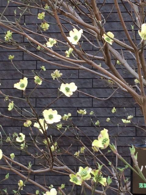 花ギフト|フラワーギフト|誕生日 花|カノシェ話題|スタンド花|ウエディングブーケ|花束|花屋|写真 4(20)