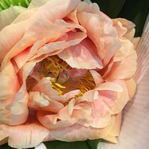 花ギフト|フラワーギフト|誕生日 花|カノシェ話題|スタンド花|ウエディングブーケ|花束|花屋|IMG_0524
