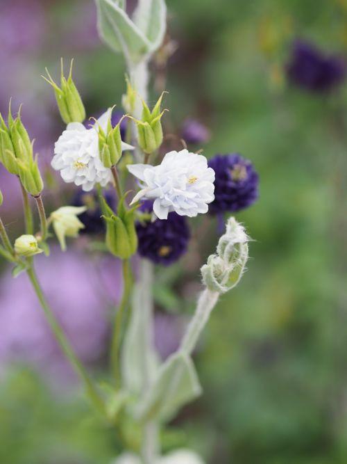 花ギフト|フラワーギフト|誕生日 花|カノシェ話題|スタンド花|ウエディングブーケ|花束|花屋|P1010776