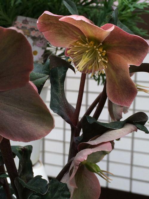 花ギフト|フラワーギフト|誕生日 花|カノシェ話題|スタンド花|ウエディングブーケ|花束|花屋|IMG_8913