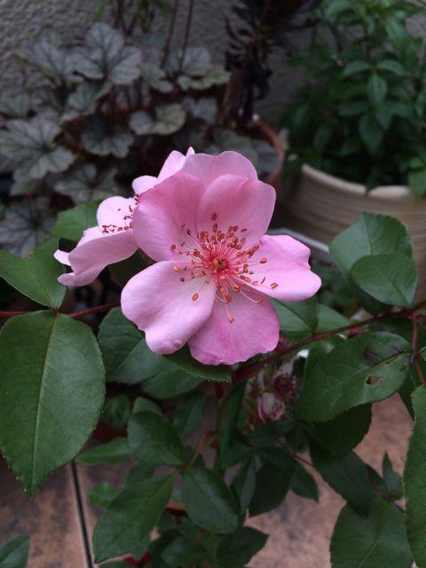 花ギフト|フラワーギフト|誕生日 花|カノシェ話題|スタンド花|ウエディングブーケ|花束|花屋|IMG_1541