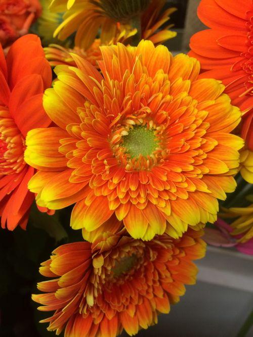 花ギフト|フラワーギフト|誕生日 花|カノシェ話題|スタンド花|ウエディングブーケ|花束|花屋|IMG_7982