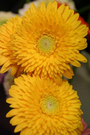 花ギフト|フラワーギフト|誕生日 花|カノシェ話題|スタンド花|ウエディングブーケ|花束|花屋|ムーンリット