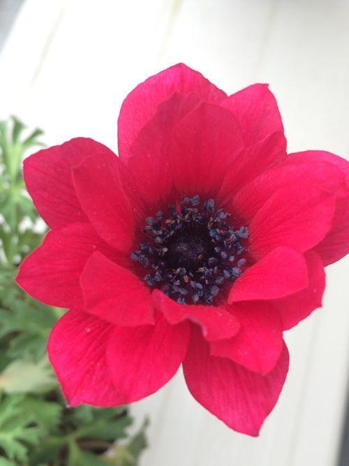 花ギフト|フラワーギフト|誕生日 花|カノシェ話題|スタンド花|ウエディングブーケ|花束|花屋|IMG_9906