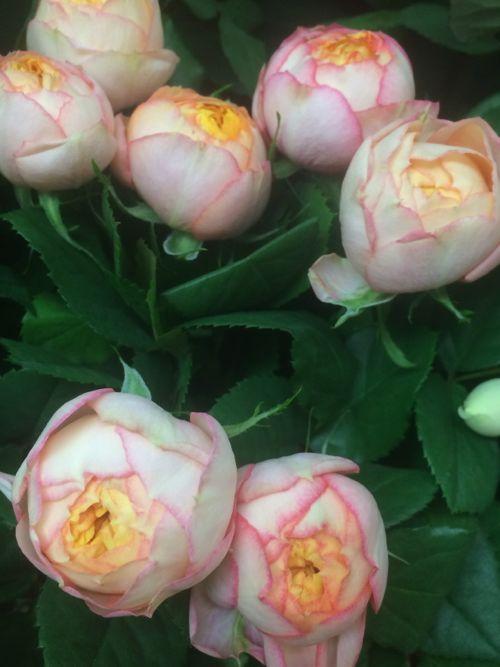 花ギフト|フラワーギフト|誕生日 花|カノシェ話題|スタンド花|ウエディングブーケ|花束|花屋|IMG_8106
