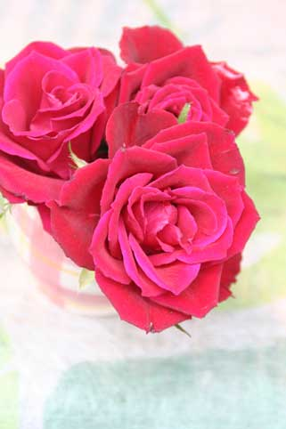 花ギフト|フラワーギフト|誕生日 花|カノシェ話題|スタンド花|ウエディングブーケ|花束|花屋|チェリーレッド