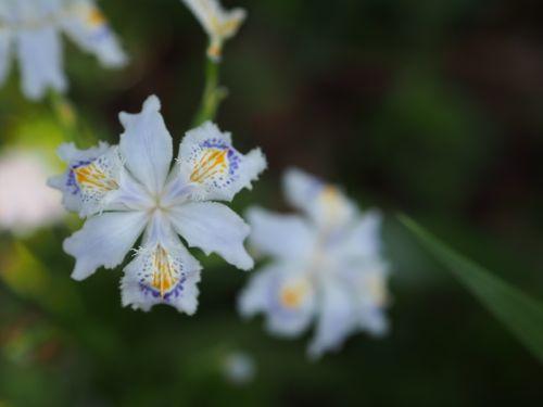 花ギフト|フラワーギフト|誕生日 花|カノシェ話題|スタンド花|ウエディングブーケ|花束|花屋|P1010486