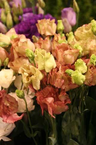 花ギフト|フラワーギフト|誕生日 花|カノシェ話題|スタンド花|ウエディングブーケ|花束|花屋|トルコ茶