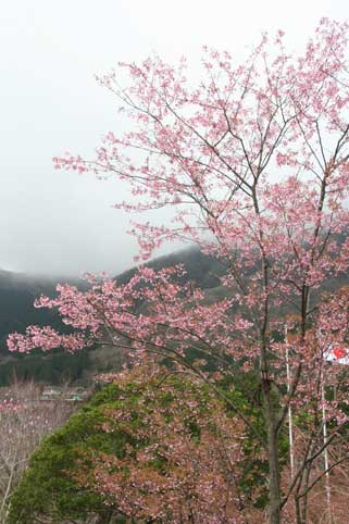 花ギフト|フラワーギフト|誕生日 花|カノシェ話題|スタンド花|ウエディングブーケ|花束|花屋|sakura