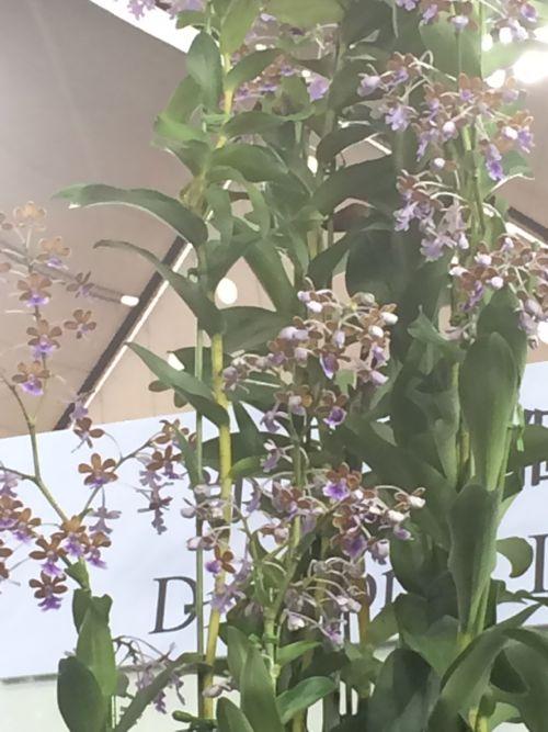 花ギフト|フラワーギフト|誕生日 花|カノシェ話題|スタンド花|ウエディングブーケ|花束|花屋|IMG_9459