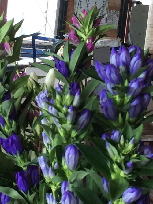 花ギフト|フラワーギフト|誕生日 花|カノシェ話題|スタンド花|ウエディングブーケ|花束|花屋|IMG_6674