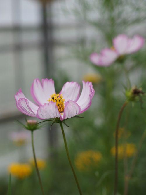 花ギフト|フラワーギフト|誕生日 花|カノシェ話題|スタンド花|ウエディングブーケ|花束|花屋|P8150175
