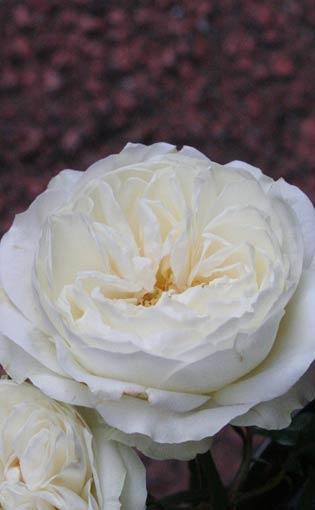 花ギフト|フラワーギフト|誕生日 花|カノシェ話題|スタンド花|ウエディングブーケ|花束|花屋|jyaru