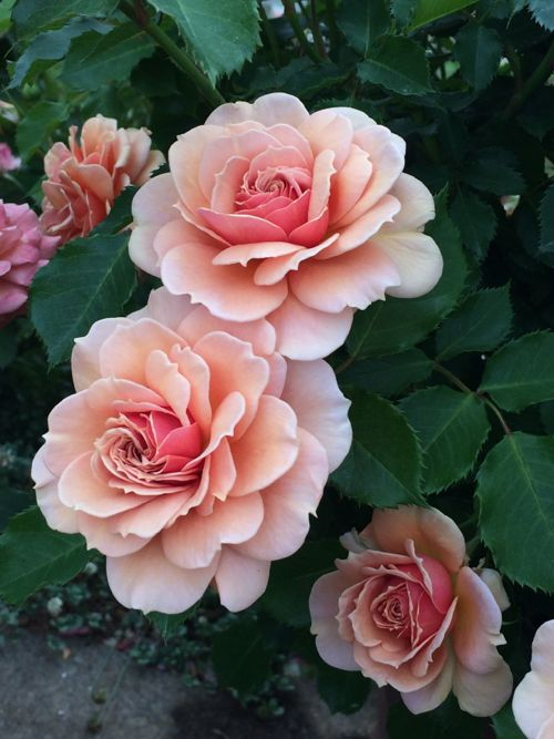 花ギフト|フラワーギフト|誕生日 花|カノシェ話題|スタンド花|ウエディングブーケ|花束|花屋|IMG_5205