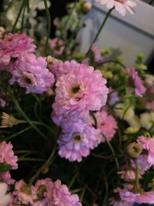花ギフト|フラワーギフト|誕生日 花|カノシェ話題|スタンド花|ウエディングブーケ|花束|花屋|IMG_4222