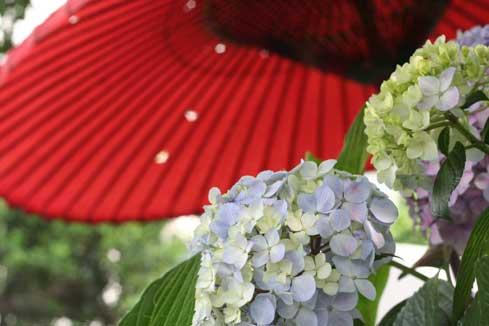 花ギフト フラワーギフト 誕生日 花 カノシェ話題 スタンド花 ウエディングブーケ 花束 花屋 赤いかさ
