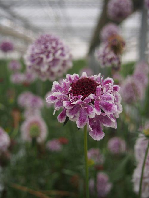 花ギフト|フラワーギフト|誕生日 花|カノシェ話題|スタンド花|ウエディングブーケ|花束|花屋|P1010036