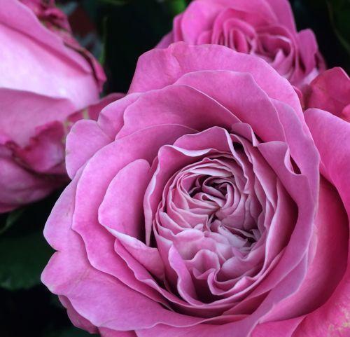 花ギフト|フラワーギフト|誕生日 花|カノシェ話題|スタンド花|ウエディングブーケ|花束|花屋|IMG_5306
