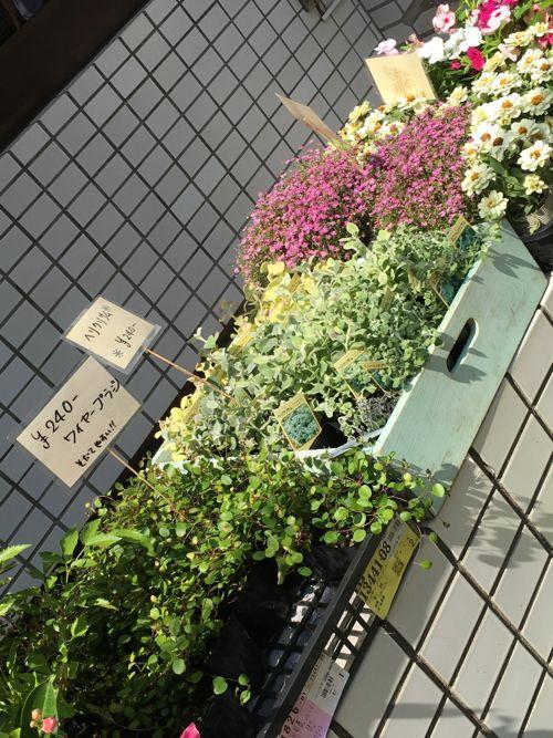 花ギフト|フラワーギフト|誕生日 花|カノシェ話題|スタンド花|ウエディングブーケ|花束|花屋|IMG_1250