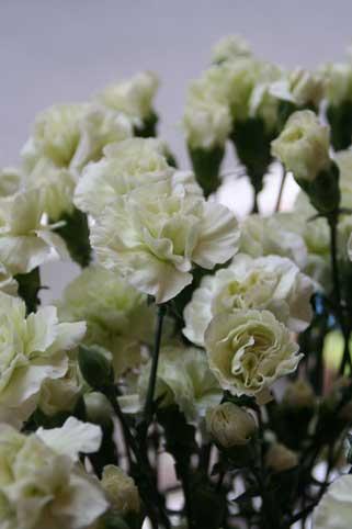 花ギフト|フラワーギフト|誕生日 花|カノシェ話題|スタンド花|ウエディングブーケ|花束|花屋|カーネグリーン