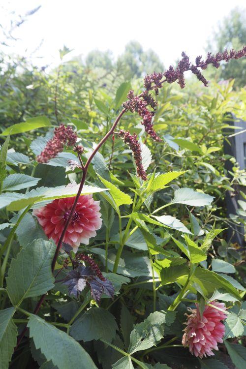 花ギフト|フラワーギフト|誕生日 花|カノシェ話題|スタンド花|ウエディングブーケ|花束|花屋|P8130088