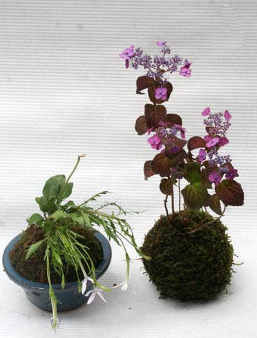 花ギフト|フラワーギフト|誕生日 花|カノシェ話題|スタンド花|ウエディングブーケ|花束|花屋|IMG_3053