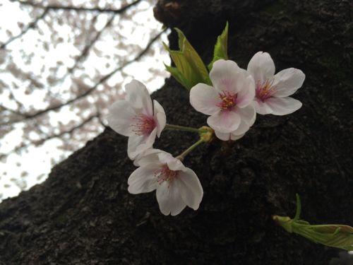 花ギフト|フラワーギフト|誕生日 花|カノシェ話題|スタンド花|ウエディングブーケ|花束|花屋|IMG_7694