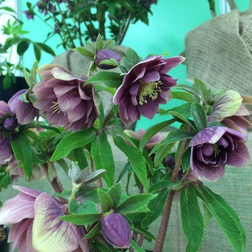 花ギフト|フラワーギフト|誕生日 花|カノシェ話題|スタンド花|ウエディングブーケ|花束|花屋|IMG_9524
