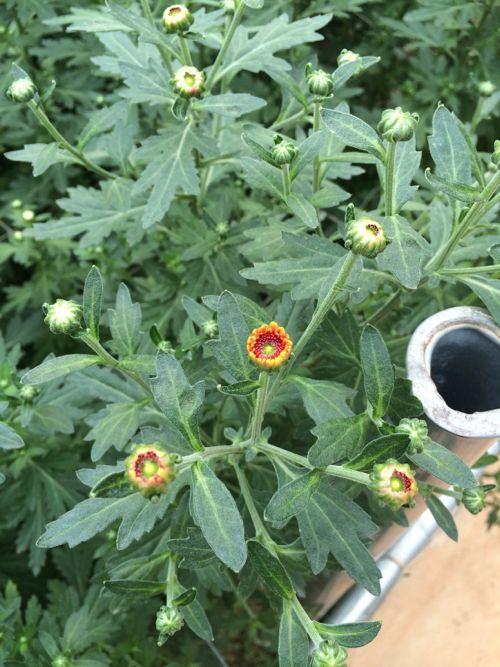 花ギフト|フラワーギフト|誕生日 花|カノシェ話題|スタンド花|ウエディングブーケ|花束|花屋|IMG_6900