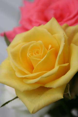 花ギフト|フラワーギフト|誕生日 花|カノシェ話題|スタンド花|ウエディングブーケ|花束|花屋|デュカット