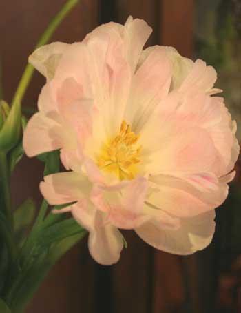 花ギフト|フラワーギフト|誕生日 花|カノシェ話題|スタンド花|ウエディングブーケ|花束|花屋|アンジェリケ