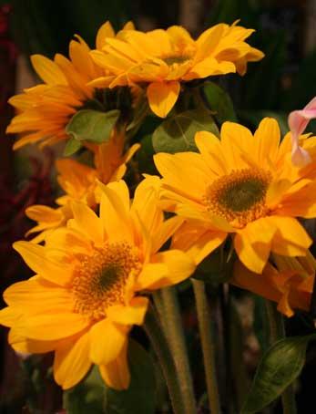 花ギフト|フラワーギフト|誕生日 花|カノシェ話題|スタンド花|ウエディングブーケ|花束|花屋|soukaensan
