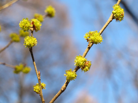 花ギフト|フラワーギフト|誕生日 花|カノシェ話題|スタンド花|ウエディングブーケ|花束|花屋|kimidori